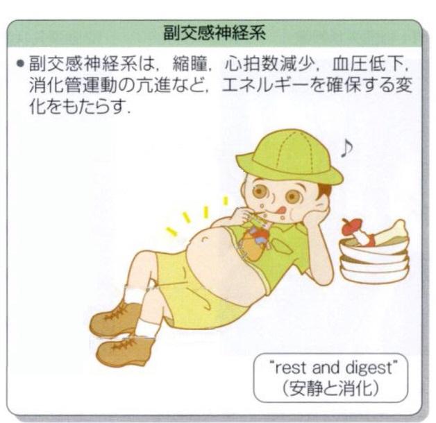 副交感神経教科書