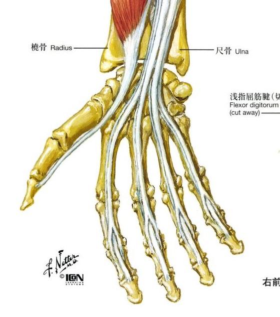 指の屈筋腱